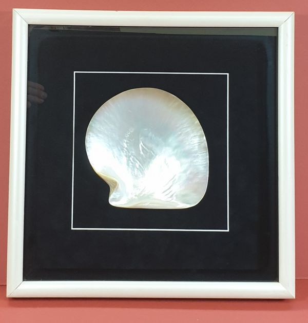 Framed Broome Pearl Shell